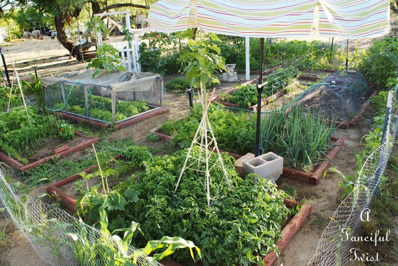 Vegetable garden 16