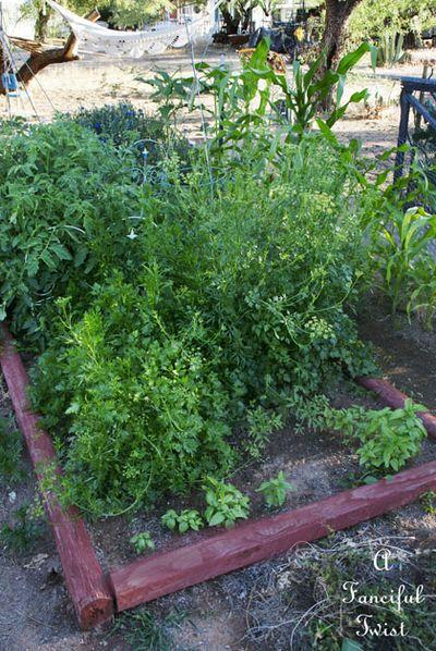 Vegetable garden 24