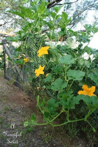 Pumpkins and sunflowers 11