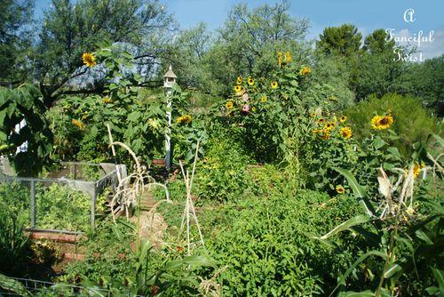 Curious garden bits 11