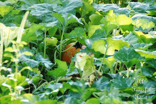 Pumpkin day 19
