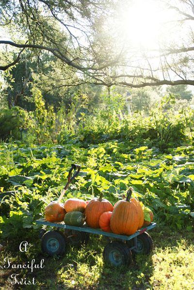 Pumpkin day 17
