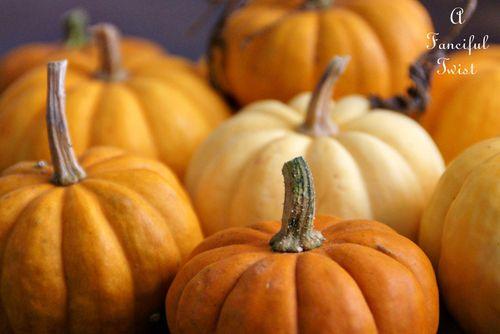 Pumpkin patch 3