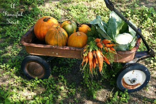 Pumpkin patch 16