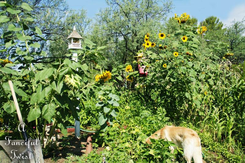 Curious garden bits 10