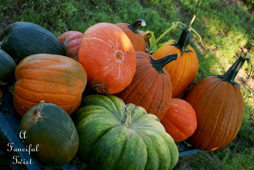 Pumpkin day 6
