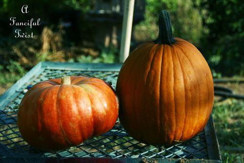 Pumpkin day 10