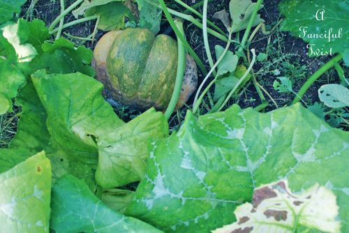 Pumpkin day 18