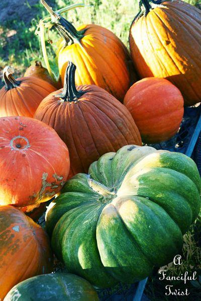Pumpkin day 5