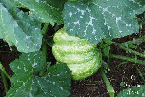 Pumpkin day 9