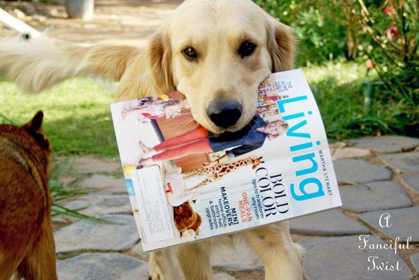 Martha Stewart Dog Delivery