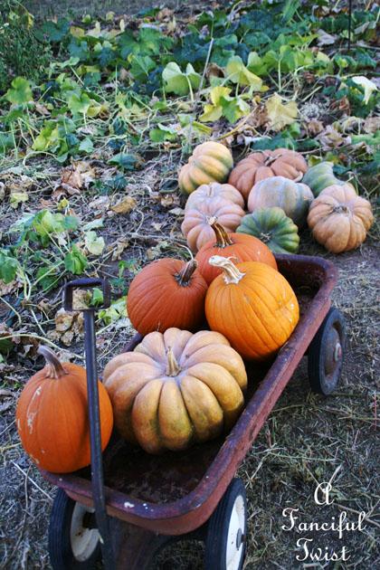 Pumpkin Picking Day 1