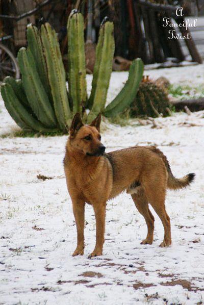 Snow dogs 5