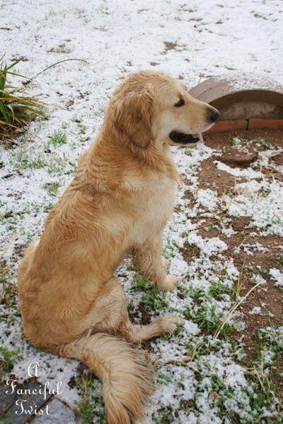 Snow dogs 6