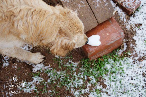Snow dogs 7