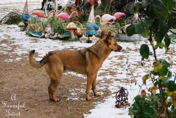 Snow dogs 18