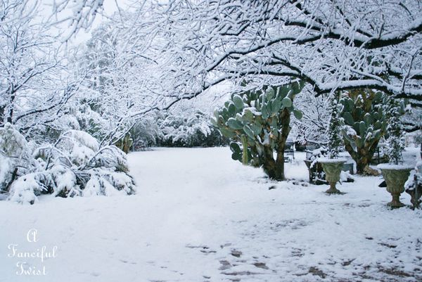 Snow fall 26