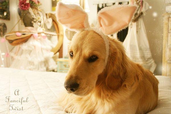 Bunny love 3