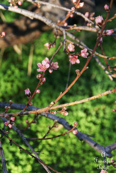 Spring love 20