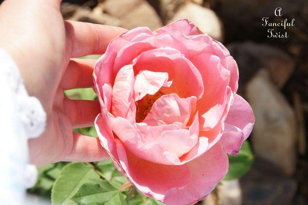 Spring love 24