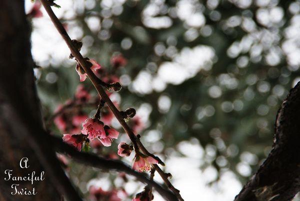 Spring day 21