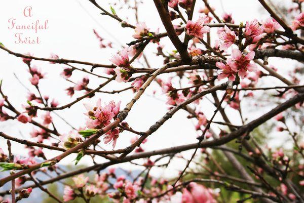 Spring day 17