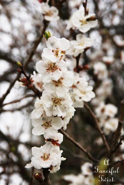 Spring day 8
