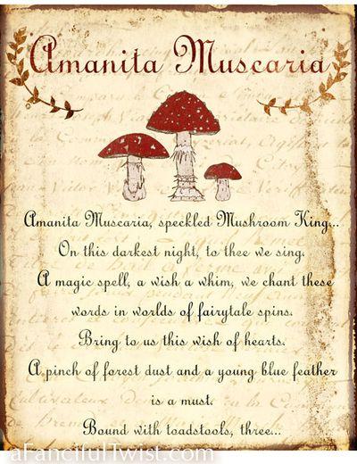 Amanita Muscaria Print