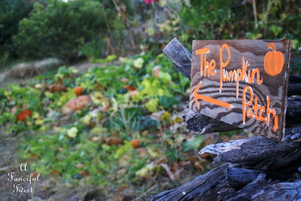 Pumpkin Picking Day 4