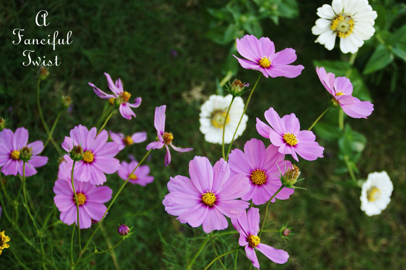 October flowers 2