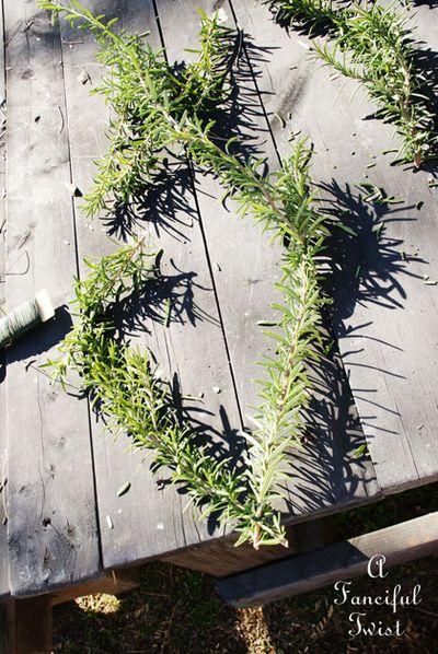 Rosemary heart 3