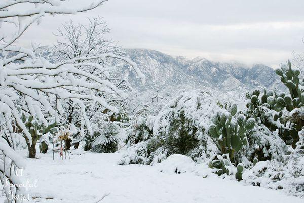 Snow fall 22