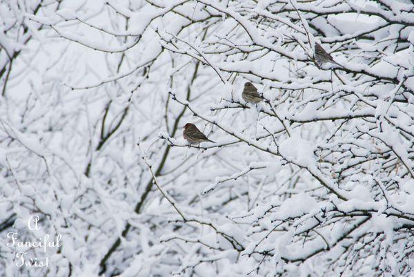 Snow fall 12