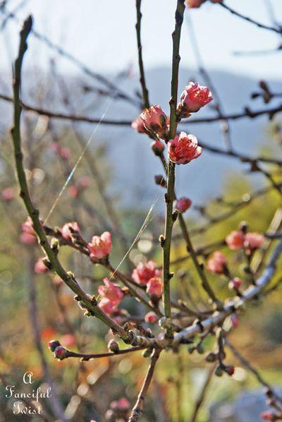 Spring love 18