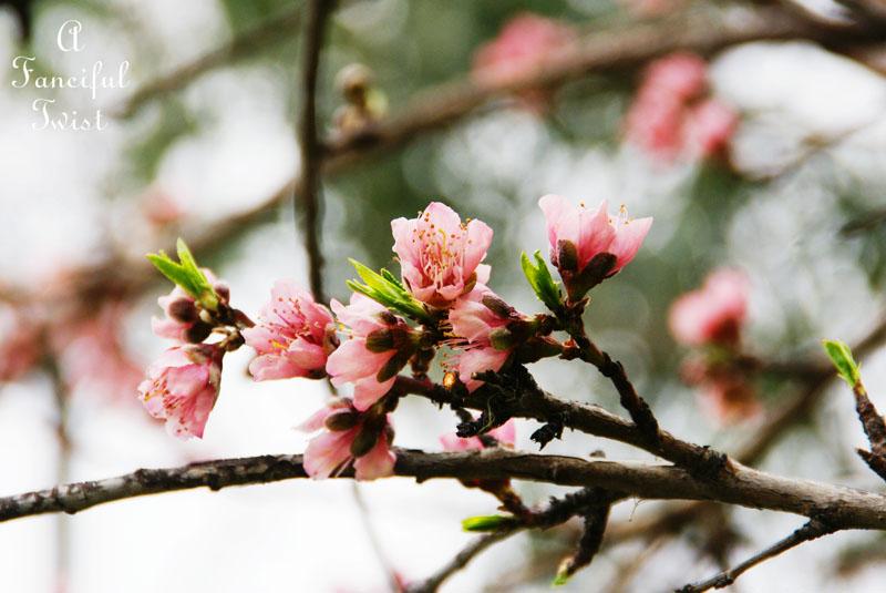 Spring day 16