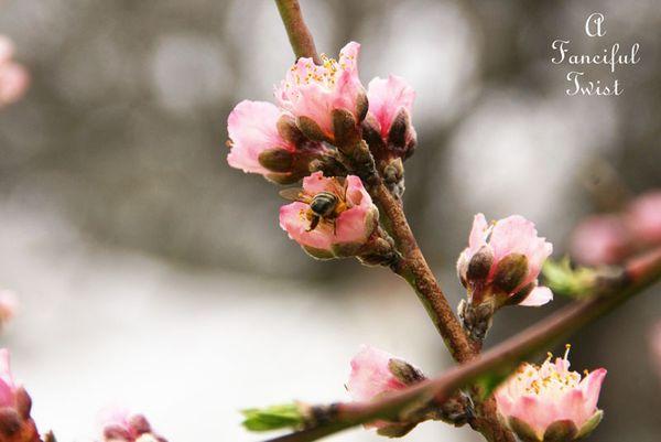 Spring day 15