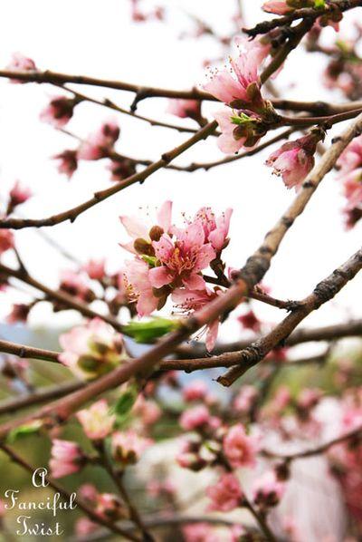 Spring day 3
