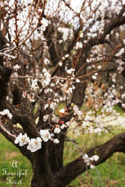 Spring day 5