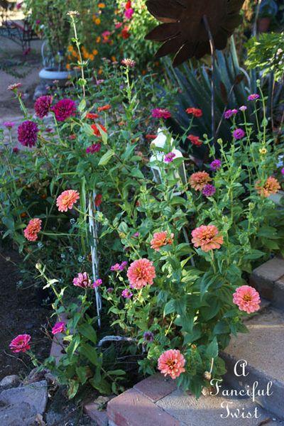 October flowers 14
