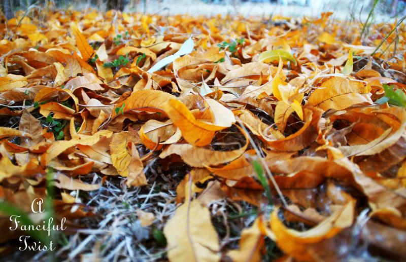 Autumn groove 1