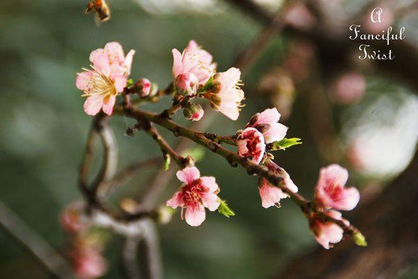 Spring day 18