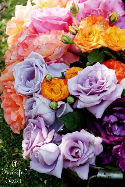 Roses 7