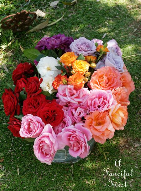 Roses 8