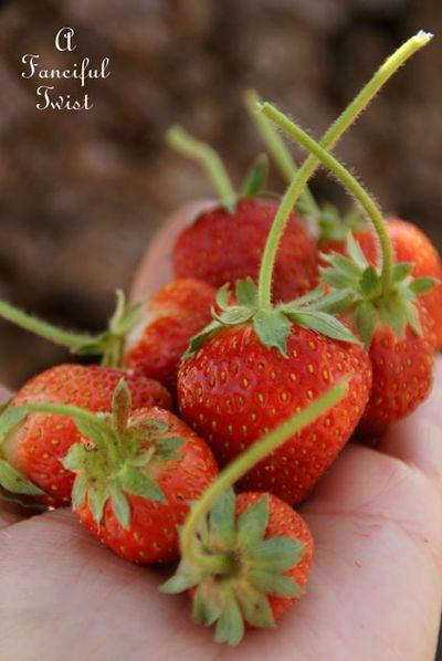 Berries and cream 11