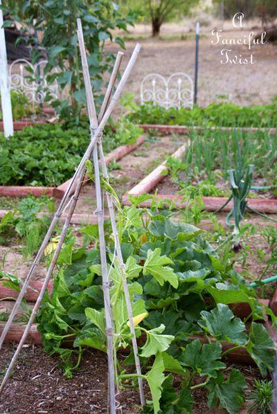 Growing garden 17