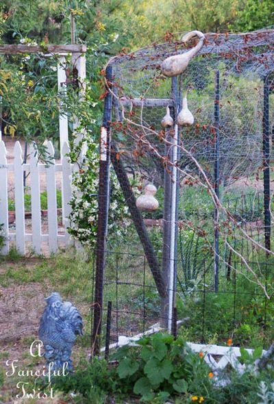 Growing garden 21
