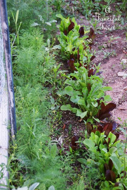 Growing garden 26
