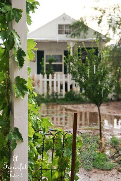 Garden rain 21