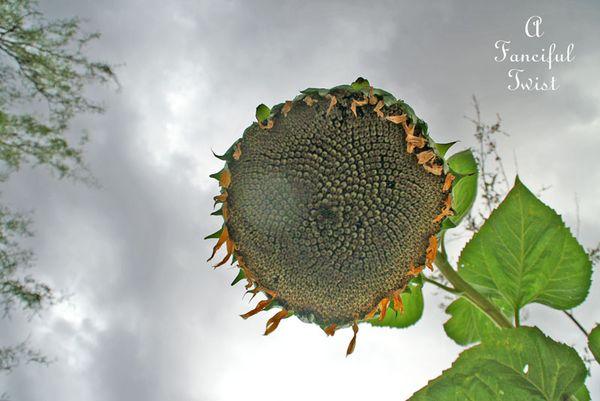 Garden rain 8