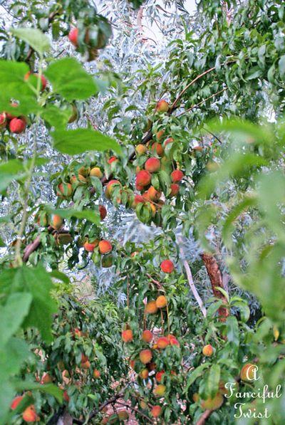 Garden rain 6